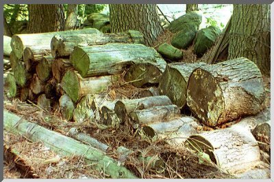 robert frost the wood pile